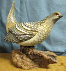 Sharp Tail Grouse by Big Sky >