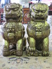 SINO TIBETAN TEMPLE DOGS